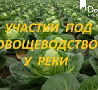 Земли сельхозназначения, 1000 соток